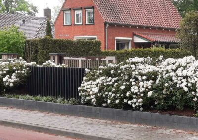 Rhododendronwolk in Lunteren