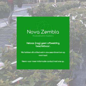 Artikel zonder afbeelding - Kwekerij Nova Zembla